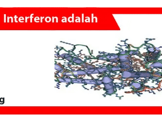 Interferon-adalah-Pengertian-Fungsi-Jenis-Efek-Samping