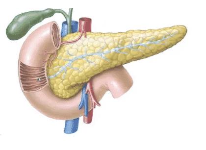 Pankreas-Pengertian-Fungsi-Gejala-Lokasi-Bagian-Struktural