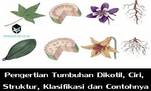 pengertian-tumbuhan-dikotil